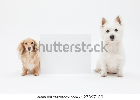 Terrier and dachshund and blank sign - stock photo