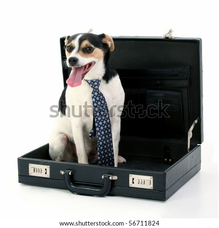 Terrier breed dog wearing tie sitting in briefcase over white background.
