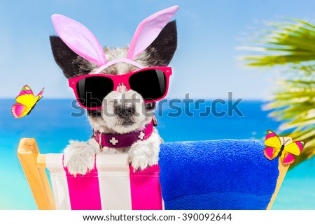 terrier dog on a hammock , during easter holidays, with bunny ears, at the beach