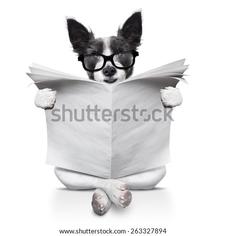 terrier dog reading newspaper sitting on the ground or floor,  isolated on white background - stock photo