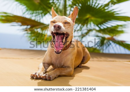 terrier dog yawning with big open mouth and closed eyes - stock photo