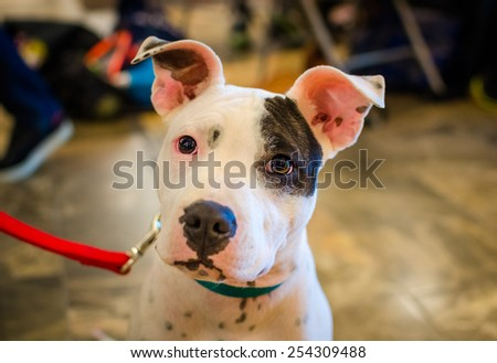 Terrier for Adoption - stock photo