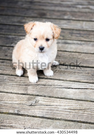 Terrier Mix Puppy Sitting Outside on Wooden Deck. Extra space for text.