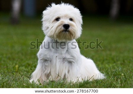 Terrier puppy sitting on the green grass - stock photo