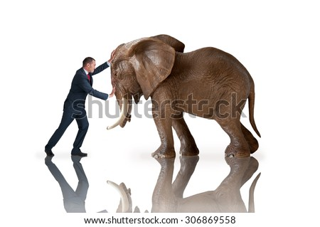 test of strength concept businessman pushing against an elephant - stock photo