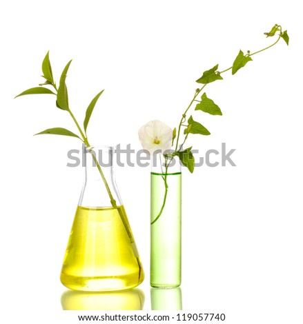 test-tubes with a colorful solution and plant isolated on white close-up