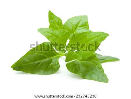 Tetragonia tetragonioides, New Zealand spinach, isolated on white - stock photo
