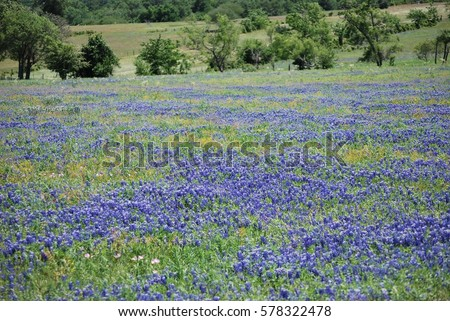 Texas Stock Images Royalty Free Images Amp Vectors