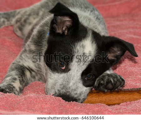 Rawhide Stock Images Royalty Free Images Amp Vectors