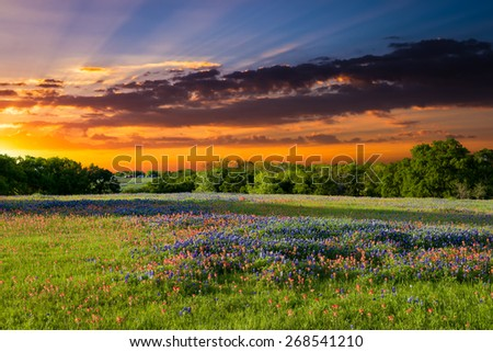 Texas pasture filled with bluebonnets and Indian paintbrushes at sunset - stock photo