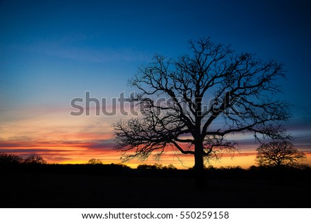 Texas winter sunset over pasture