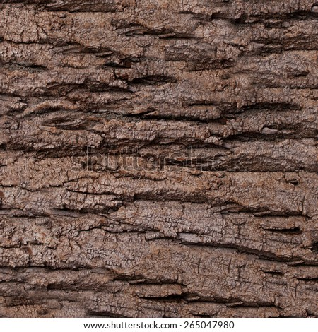 Texture - a bark of an old oak. Old Wood Tree Background Pattern - stock photo