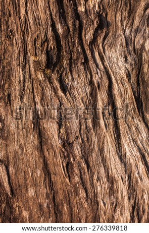 Texture - a bark of an old tree - stock photo