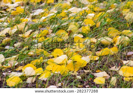 texture autumn leaves. Abstract background of autumn leaves. Autumn background. Colorful autumn leaves.  - stock photo