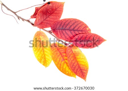 Texture, background. autumn leaves. - stock photo