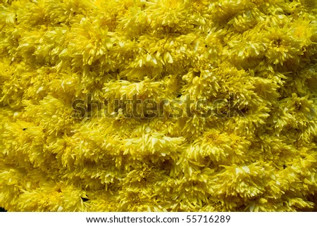 Texture background of bundles of yellow flowers.