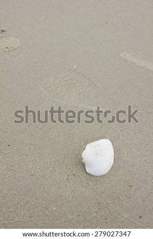 Texture background of the sandy beach with natural arrangement, focus on white shell