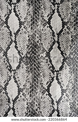 texture background snake leather  - stock photo