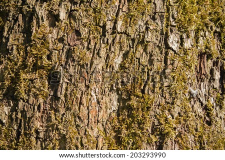 Texture - Detail of tree bark and moss - stock photo