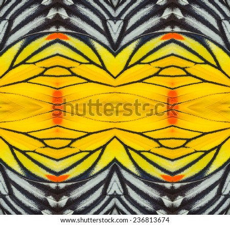 Texture from Painted Jezebel butterfly wing for background - stock photo