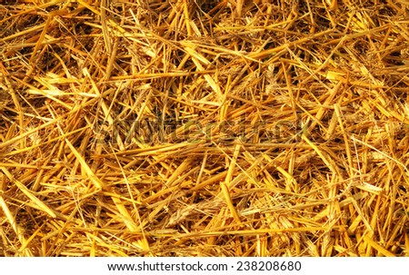 Texture hay closeup in color - stock photo