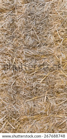 Texture hay closeup in color straw dry - stock photo