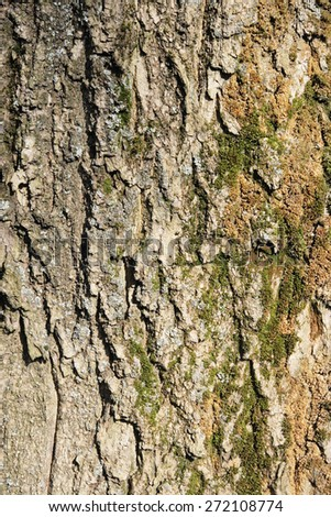 Texture larch bark, background (Larix)  - stock photo