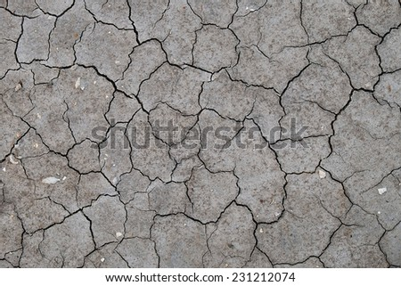 Texture of a dry and cracked gray river bed with fossil shells - stock photo