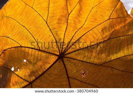 Texture of a dry leaf as background