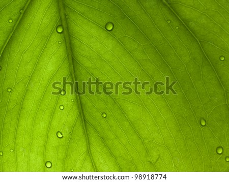 Texture of a green leaf background - stock photo