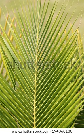 Texture of a green leaf with the shadows of small sheets of