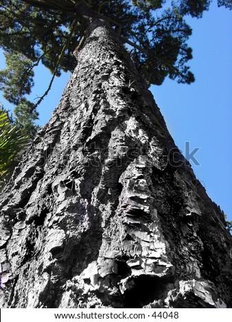 Texture of a tree bark - stock photo