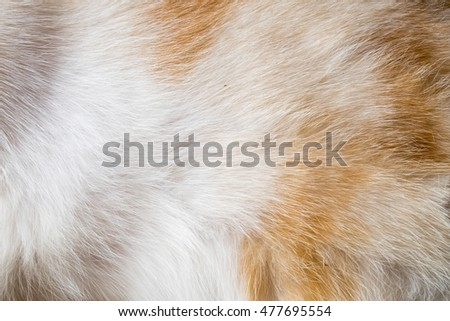 Texture of a wool of a cat of white and brown color.