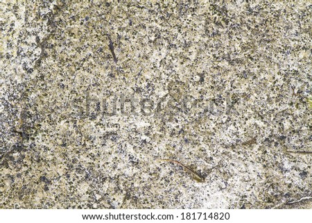 texture of algae on rocks - stock photo