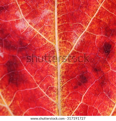 Texture of an autumn leaf close up