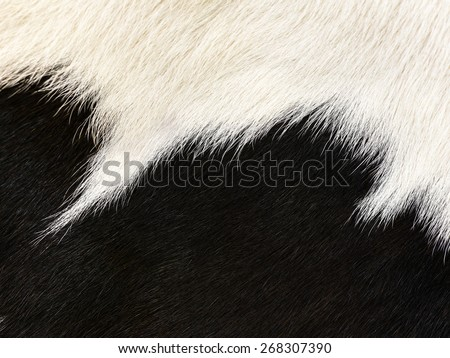 texture of animal skin closeup - stock photo