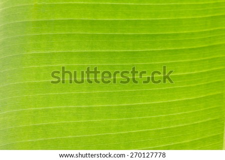 Texture of backlight fresh green Leaf background - stock photo