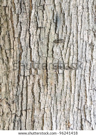 Texture of bark  in the natural park. - stock photo