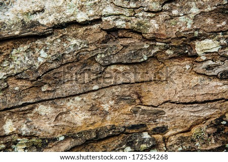 texture of bark of tropical trees  - stock photo