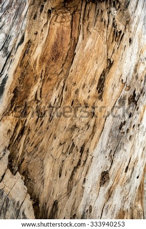 texture of bark wood molder