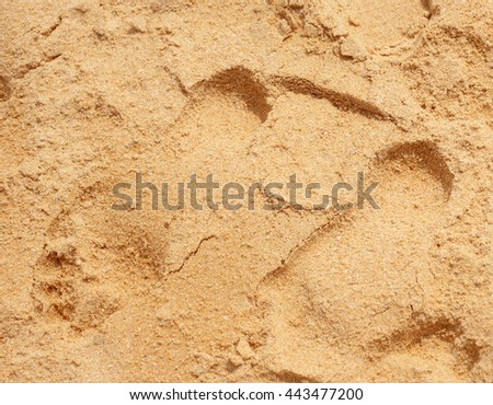 Texture of beach sand background - stock photo