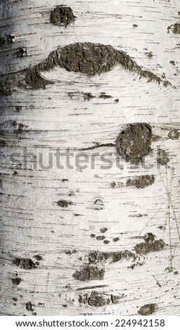 Texture of birch bark covered with green moss