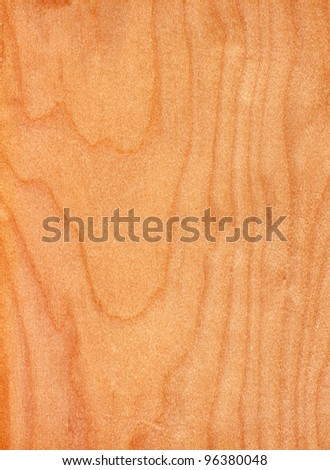 Texture of birch (high-detailed wood texture series)