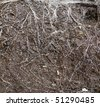Texture of brown earth and white plant roots - stock photo