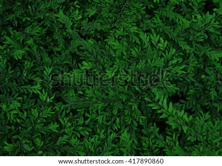 texture of bush, nature feel surface