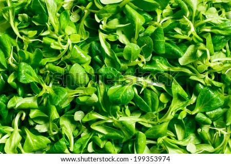 texture of corn salad, lamb's lettuce  - stock photo