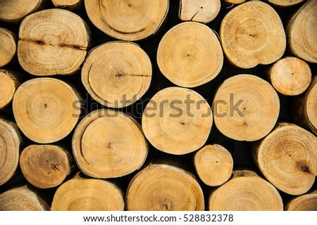 Texture of cross section wood logs