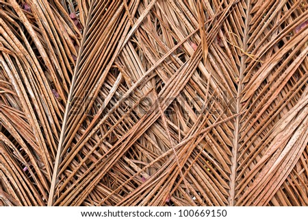 texture of dry palm - stock photo
