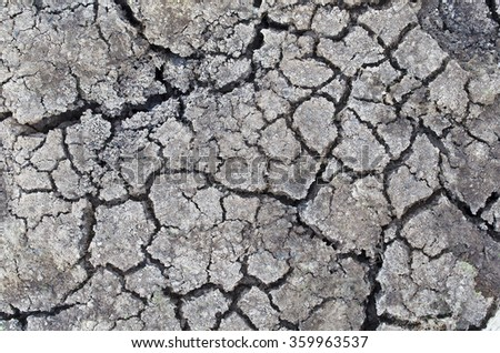 Texture of dry soil background