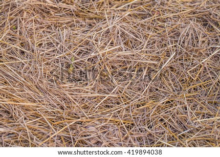 Texture of dry straw in the bale. background. close-up - stock photo
